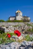 Domkyrka för St. Vladimir i Chersonesus, Crimea Royaltyfri Fotografi