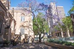 Domkyrka och Sydney Town Hall för St Andrew ` s arkivbild