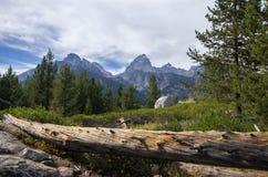Domkyrkagrupp i den storslagna Teton nationalparken bak en journal Royaltyfri Foto