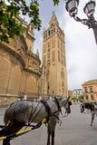 Domkyrkan av Seville med de Giralda sikterna från piazza Virg arkivbild