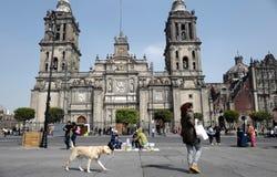 domkyrkastadsärkebiskop mexico Arkivbild