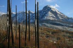 Dommages d'incendie de forêt Photo libre de droits