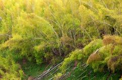Dommages de tempête dans la forêt photo stock