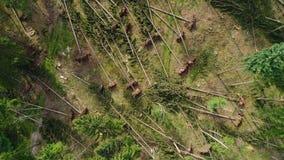 Dommages de tempête, forêt banque de vidéos