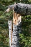 Dommages de vent Photo libre de droits