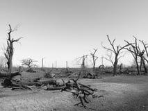 Dommages noirs et blancs de tempête image libre de droits