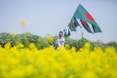 Domokrążca sprzedaje Bangladeskie flaga państowowa przy musztardy polem przy Munshigonj, Dhaka, Bangladesz Obrazy Stock