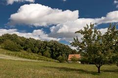 domowa łąka Obrazy Stock