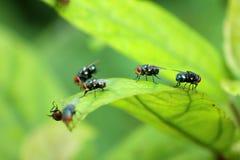 Domowa komarnica, karmowego kontaminowania higieny pojęcie Obrazy Royalty Free