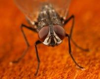 Domowa komarnica na drewnie Fotografia Stock