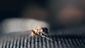 Domowa komarnica suszy i ono czyści zdjęcie wideo