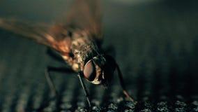 Domowa komarnica suszy i ono czyści zbiory wideo