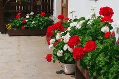 Domowa kwiatów garnków dekoracja Fotografia Stock