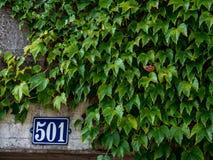 Domowa liczba 501 przy betonową ścianą z ścienną rośliną zakrywa je fotografia royalty free