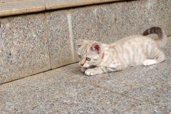 Domowa śliczna kot sztuka plenerowa Zdjęcie Royalty Free