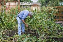 Domowa ogrodniczka fotografia royalty free