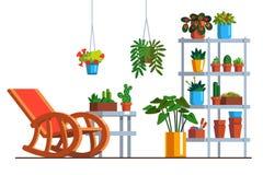 Domowa ogrodowa oranżeria lub patio z izbowymi roślinami Obrazy Stock