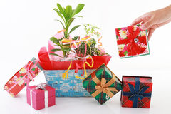 Domowa roślina z prezentów pudełkami Zdjęcia Stock