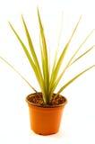 domowa roślina zdjęcie stock