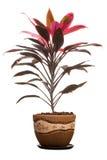 domowa roślina Zdjęcia Royalty Free