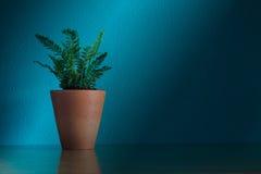 Domowa roślina na tabela Zdjęcie Royalty Free