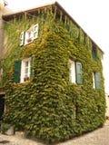 domowe castellarano rośliny s Obrazy Royalty Free