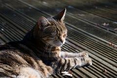 Domowego kota obsiadanie w słońcu na decking z oczami clsoed zdjęcie royalty free