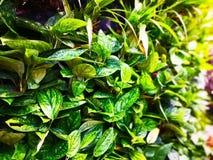 Domowej dekoraci i naturalnego tła pojęcie Wiele zielony urlop fotografia royalty free