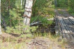 Domowej roboty drewniany most przez wąskiego lasowego strumienia Obraz Royalty Free