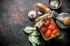 Domowej roboty kiszeni pomidory z pikantność zdjęcia royalty free