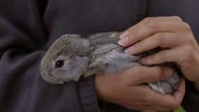 Domowej roboty królik w rękach kobieta zdjęcie wideo