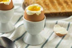 Domowej roboty miękkiej części Gotowany jajko w filiżance Zdjęcia Royalty Free