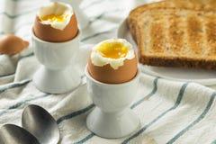 Domowej roboty miękkiej części Gotowany jajko w filiżance Zdjęcia Stock