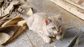 Domowi śliczni koty z sandałem plenerowym Zdjęcia Stock