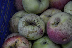 Domowi świezi jabłka w drewnianych skrzynkach Brudzę demaged życiorys jabłka w pudełku Zdjęcia Royalty Free
