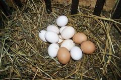 domowi jajka Zdjęcie Stock