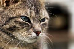 Domowi koty 002 Zdjęcia Royalty Free