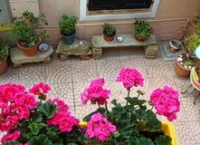 Domowi różnorodni kwiaty w garnkach Projekt włoszczyzny podwórza zdjęcia royalty free