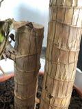 Domowi roślina bagażniki z zielonymi liśćmi obraz royalty free