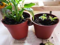 Domowy ślimaczek na kwiacie Te ślimaczki które zaludniają dają one żyją w domu i jedzą jedzenie obrazy stock