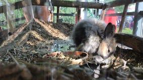 Domowy śliczny królik zbiory