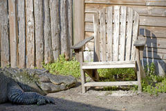 domowy aligatora outside obraz stock