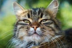 Domowy cat Zdjęcia Stock