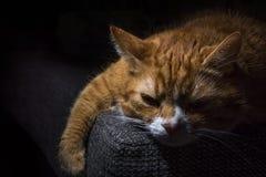 Domowy cat Zdjęcia Royalty Free