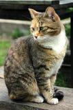 Domowy cat fotografia stock