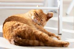 Domowy czerwony kot r w nowożytnym domowym wnętrzu obrazy stock