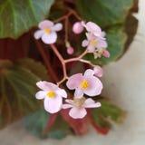 Domowy dekoracja kwiat Zdjęcie Stock