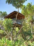 domowy drzewo Zdjęcie Stock