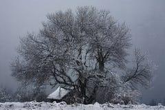 domowy drzewo Zdjęcia Stock