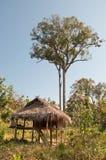 domowy drzewo Fotografia Royalty Free